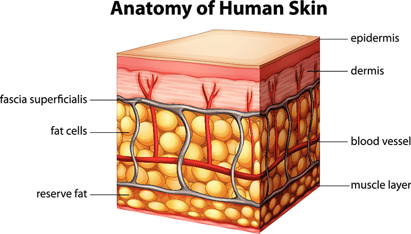 Plastic surgery for skin cancer, Geelong